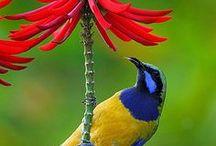 sunbird / uccelli del sole