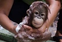 Monkey Business ....