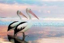 Brilliant Birds !