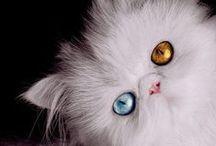 Ray's Cat Photos / by Mix 94.9 Cincinnati