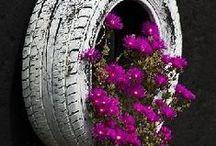 Gardening & Landscaping Ideas / Gardening and landscaping ideas & tips / by 94.9 Cincinnati