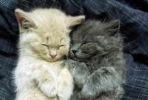 Cats & Dogs / Cute pics