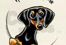 Шeenie dogs / by Stacie Noriega