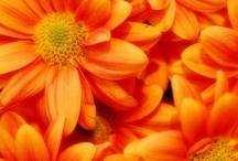 TaNgErInE~TaNGo / Tangerine is the color of creativity, ambition and drive... stimulates creative thinking and enthusiasm, the willingness to embrace new ideas with enjoyment and a sense of exploration and creative play. / by Karen Stevens