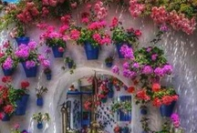 Mexican Courtyards & Gardens / by Barbie Anderson