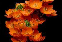 Botanical / Flowers, botanical inspiration and photography  / by Jezhawk Designs