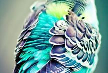 Birds / Birds!