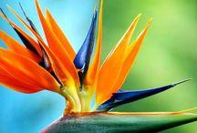 Art. Flowers