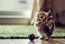 Cute Animals / by Taylor