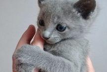 ♡Gray Cat♡