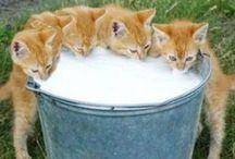 Lovery Cats / ラブラブなにゃんこ達