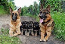 Dogs / Man's best friend. / by Carolyn Conatser