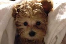cute dogs...
