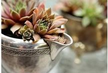 Succulent Joy / Unique and creative ways to enjoy succulents inside and outside of your home.