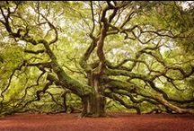 Trees / Beautiful Trees of the World