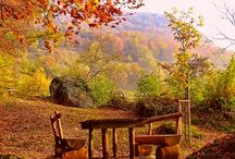Autumn leaves / September,October and november / by Jilly Spendlow