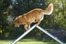 Dog parks / pet parks / Dog park