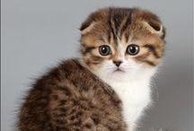 kediler / cats / bir kedisever'in kedileri..