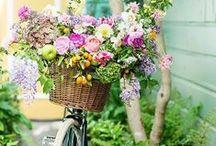 Landscape gardens lighting flowers