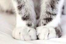 Adore cats