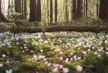 In the forest  ~ Metsässä