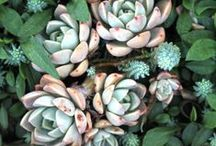 PEPO PLANT DETAILS / Beautifully captured images of flowers and foliage in Australian gardens by Pepo Botanic Design.