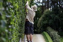 PEPO GARDEN MAINTENANCE / Beautiful Sydney gardens maintained by Pepo Botanic Design.