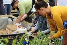 PEPO COMMUNITY GARDENS / Pepo Botanic Design contributing to our Sydney community