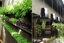 Pepo Botanic Design - Restaurant Design