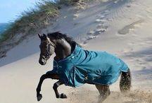 Hvilken farve passer til din hest? / Hvilken farve passer til din hest? Find svarende her.  Guide til din hests gode udstyrs farver.  Find alle de farver som klæder din hests farve.