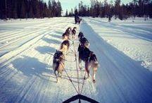 Hundeschlitten / Eines der ältesten gezogenen Transportmittel der Welt: der Hundeschlitten. Meist von Huskys oder Alaskane Malamutes gezogen, ermöglichen sie das zuverlässige Vorankommen auch bei niedrigen Temperaturen – und Spaß macht es dazu! Wet sich auf Schlitten-Tour in Kanada begeben wil, ist hier richtig: http://www.sktouristik.de/index.php?stoken=9B27691C&force_sid=&lang=0&cl=search&searchparam=schlitten
