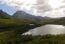 USA: Hawaii / Herzlich willkommen in Hawaii! Die Inselkette im Pazifischen Ozean ist das Traumziel vieler USA-Urlauber: Üppige Tropenwälder, rauschende Wasserfälle, endlose Strände und schroffe Vulkanlandschaften lassen jeden Naturliebhaber auf seine Kosten kommen.