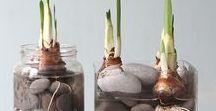 Indoor Bulbs