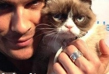 grumpy cat and friends