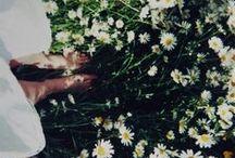 \white meadow/