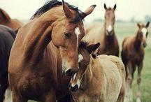 Passion / O koniach
