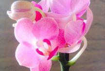 Qties / Orchid Qties