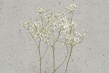 \blog plants/