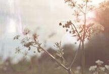 \sunny garden/