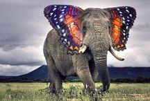 Elle-e-Phants / Earth's most majestic creatures