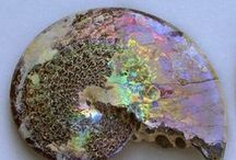 Essence of Iridescence / Iridescence is the property of certain surfaces that appear to change color as the angle of view or the angle of illumination changes. Examples of iridescence include soap bubbles, butterfly wings and sea shells, as well as certain minerals.