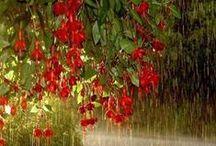 rain or shine'-'