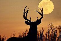 Deers / ♥️♥️♥️