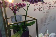 Glorious Wonders of Amsterdam
