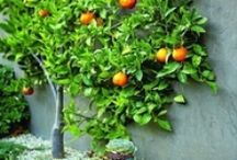 Espalier / Ideas for our espalier trees