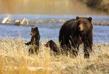 bears / by sondra :))
