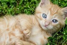 PETS & ANIMALS / Best Care for your Pets