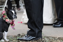 Every dog has its {special} day! / Dogs making special appearances at weddings & engagement sessions we've photographed.