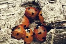 Jednoduché hmyzí domečky