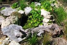 """Osázené """"kaluže"""" / Ukázka mini jezírek, kde převažují rostliny a vodu skoro hledáte pod lupou. Mají však své osobité kouzlo, pro živočichy jsou to takové malé kousky ráje."""
